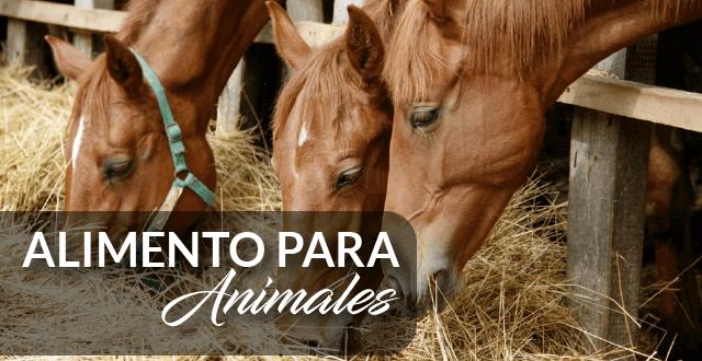 alimentos-para-animales-granimeglioe
